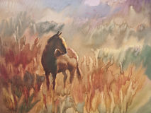 Foal in the meadow. Horse and cute foal. watercolor handmade illustration Royalty Free Stock Images