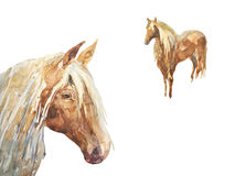 Foal in the meadow. Horse and cute foal. watercolor handmade illustration Stock Image