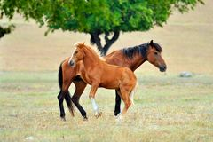 Foal and mother horse on field Stock Photos