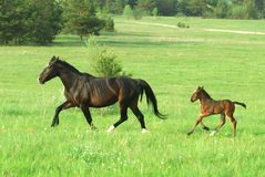 foal mum Στοκ Εικόνα