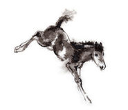 Foal oriental ink painting, sumi-e Royalty Free Stock Photography