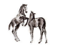 Foal oriental ink painting, sumi-e Royalty Free Stock Images