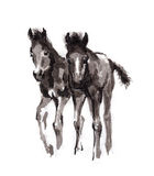 Foal oriental ink painting, sumi-e Royalty Free Stock Image