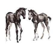 Foal oriental ink painting, sumi-e Stock Photos