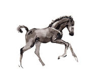 Foal oriental ink painting, sumi-e Stock Images