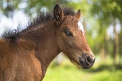 Foal outdoors in the summer royalty free stock image
