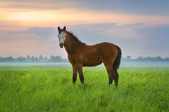 Foal on pasture stock photo