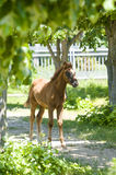 Foal on path solar day Royalty Free Stock Images