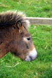 Foal. pony. baby horse. young horse Royalty Free Stock Images