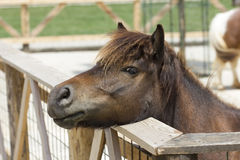 Foal portrait Royalty Free Stock Photos