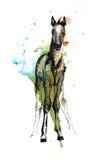 Foal Stock Photo