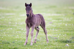 Foal standing on meadow Stock Photo