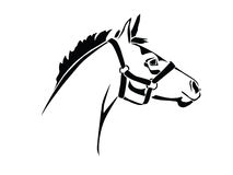Foal. Stencil horse's head on a white background Royalty Free Stock Photo