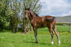 Foal in the summer sun. royalty free stock photography