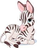 Foal sveglio della zebra Fotografie Stock Libere da Diritti