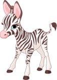Foal sveglio della zebra illustrazione vettoriale