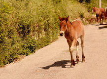 Foal. On the way to the stable Royalty Free Stock Image
