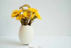 Foalfoot flowers in the eggshell Royalty Free Stock Images