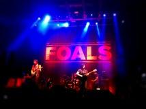 Foals συναυλία Στοκ Εικόνα