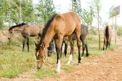 foals Στοκ Φωτογραφία
