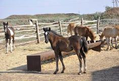 foals Στοκ εικόνα με δικαίωμα ελεύθερης χρήσης