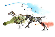 foals Royalty-vrije Stock Foto