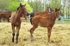 Foals Stock Photos