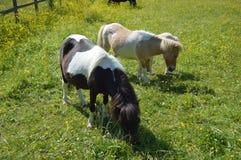 2 foals στοκ φωτογραφία με δικαίωμα ελεύθερης χρήσης