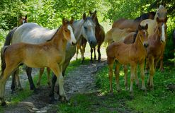 Foals in Caucasus Royalty Free Stock Photos