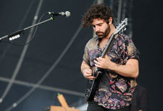 Foals Stock Photography