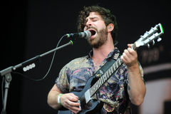 Foals Royalty Free Stock Images