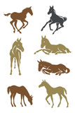 Foals vector design Royalty Free Stock Images