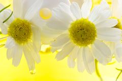 Foam for a bath with camomile Royalty Free Stock Images