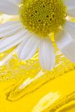 Foam for a bath with camomile Stock Images
