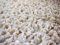 Foam of a beer fermenting Stock Image