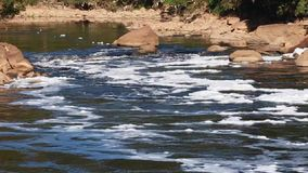 Foam of pollution on Tiete River stock video footage