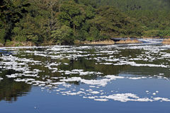 Foam of pollution on the Tiete River Royalty Free Stock Photo