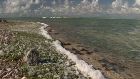Foam at salt pan on Bonaire stock video
