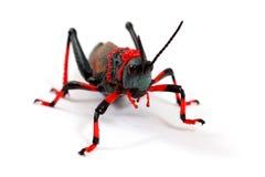 Foaming Grasshopper Stock Image