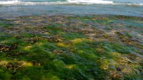 Foaming ocean waves with underwater plants on foreground. Foaming ocean waves on horizon with blurry underwater plants on foreground slow motion. Concept tsunami stock video
