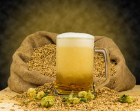 Foamy mug of beer. Mug fresh beer,malt and hops Royalty Free Stock Photo