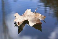 foating的叶子 库存照片