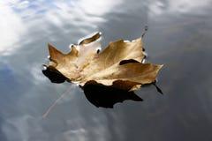 foating листья Стоковое Изображение RF