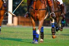 Focalize o cavalo do pé em Polo Matc imagem de stock