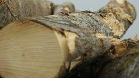 Focalizzando di nuovo sul tronco di albero abbattuto archivi video