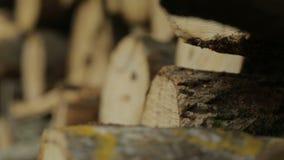Focalizzando di nuovo sul tronco di albero abbattuto mucchio archivi video