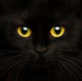 Focinho bonito de um fim do gato preto acima