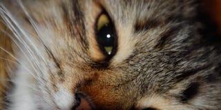 Focinho de um gato listrado 1 doméstico imagens de stock