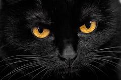 Focinho de um gato preto Fotos de Stock