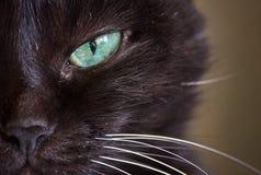 Focinho de um gato preto Fotografia de Stock